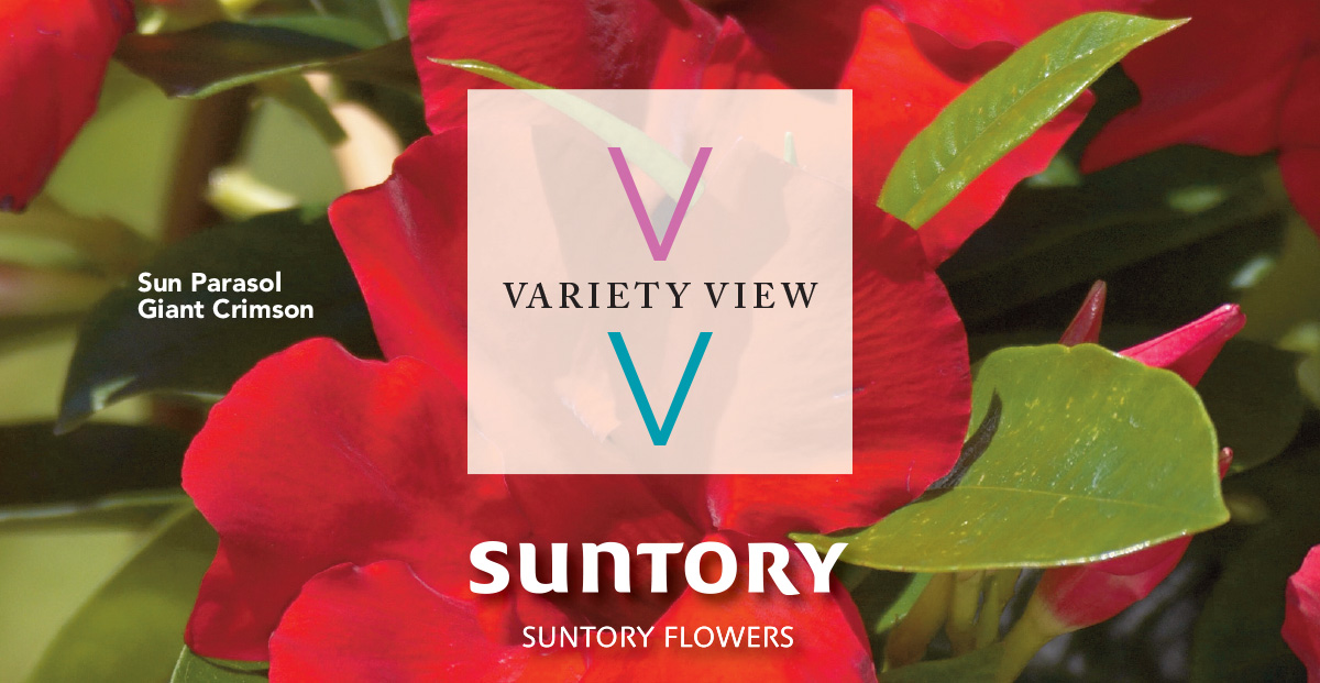 Suntory Flowers Variety View – Sun Parasol Staycation Retail Kit