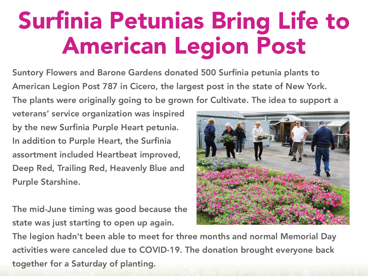 Surfinia Petunias Bring Life to American Legion Post