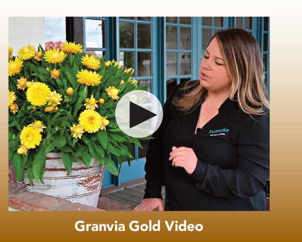 Video: Granvia Gold