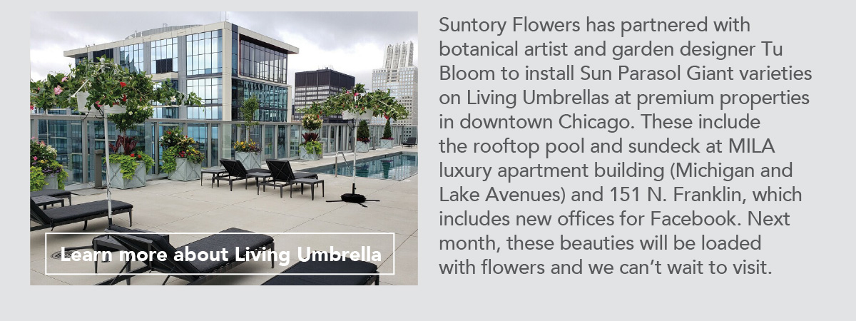 Learn more about Living Umbrella