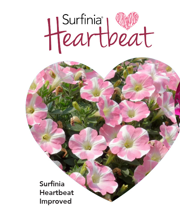 Surfinia Heartbeat Improved
