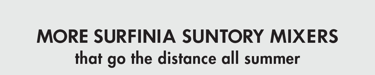 MORE SURFINIA MIXERS