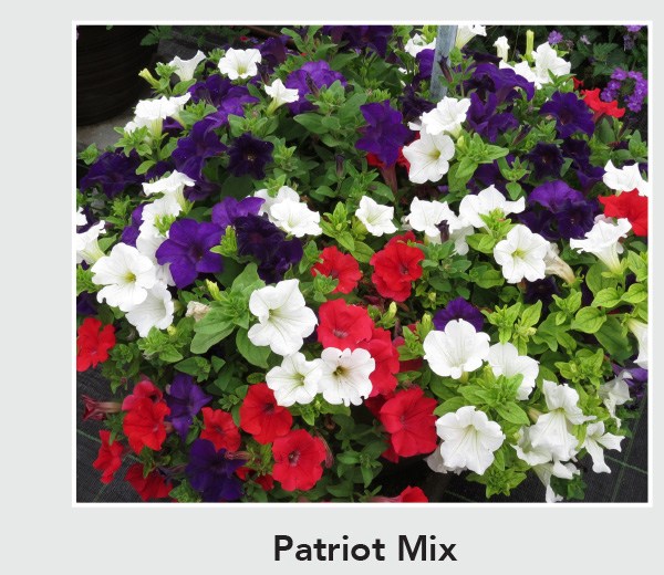 Patriot Mix