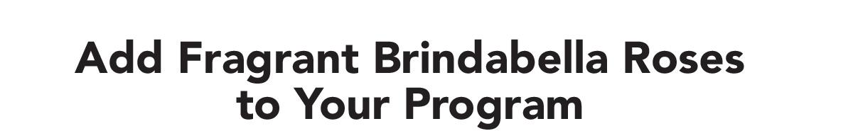 Add Fragrant Brindabella Roses to your Program