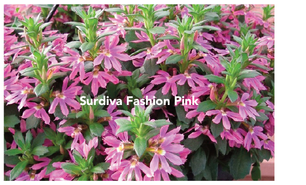Surdiva Fashion Pink