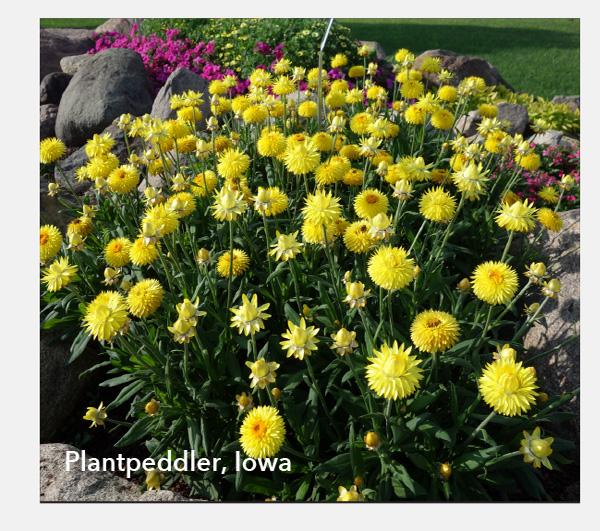 Plantpeddler, Iowa
