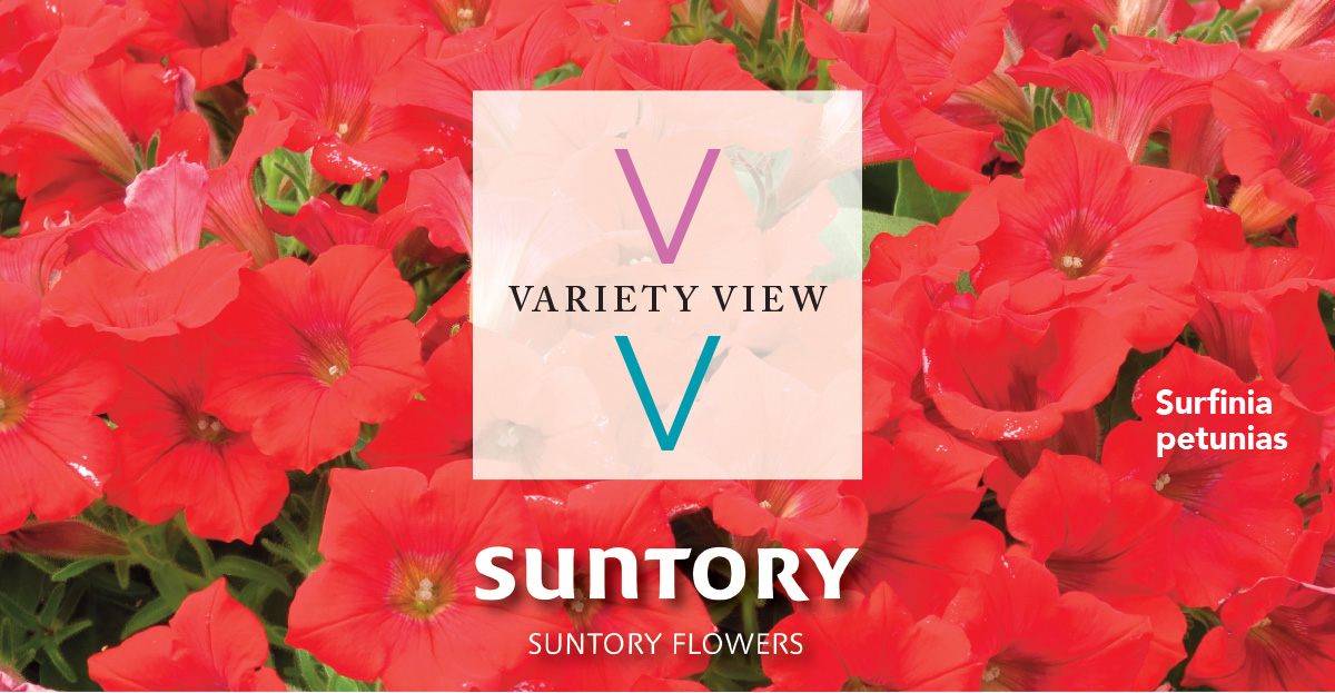 Suntory Flowers Variety View – Leading Brands Available As Basewell