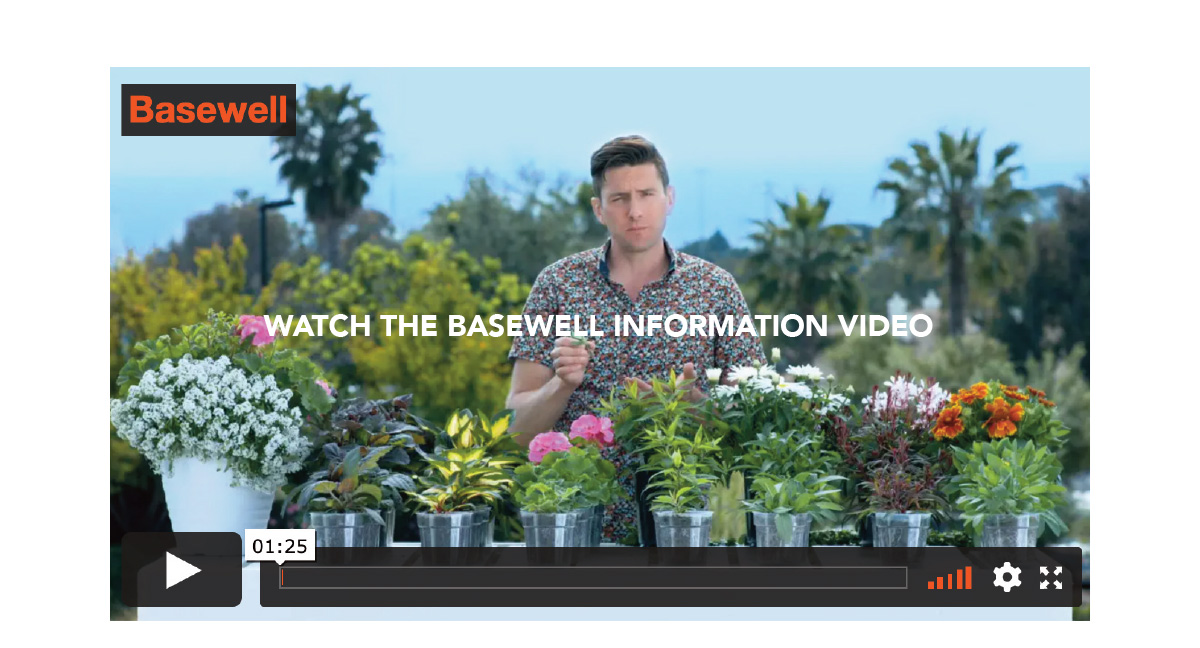 Watch the Basewell information video