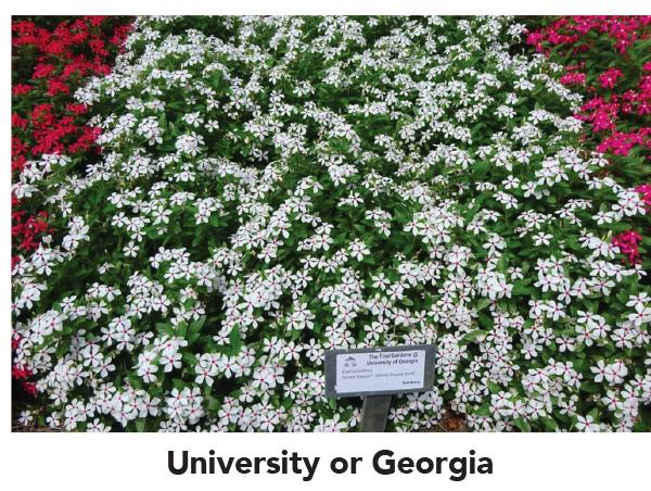 University or Georgia