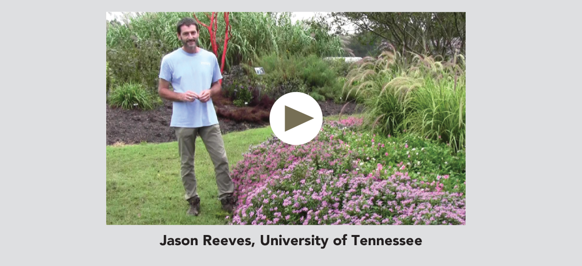 Watch Video: Jason Reeves, University of Tennessee
