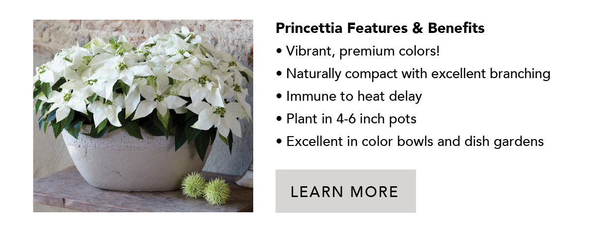 Features and benefits of Princettia Poinsettias