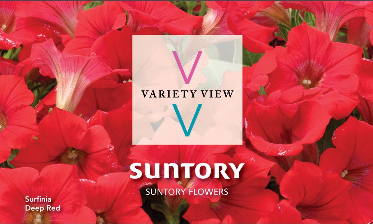 Suntory Flowers Variety View – Essential Surfinia Top Sellers