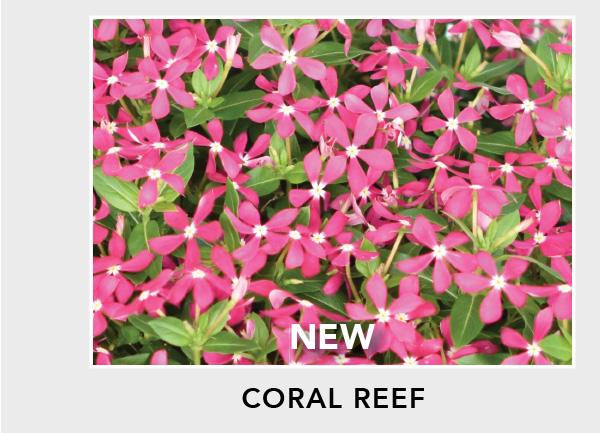 New! Soiree Kawaii Coral Reef