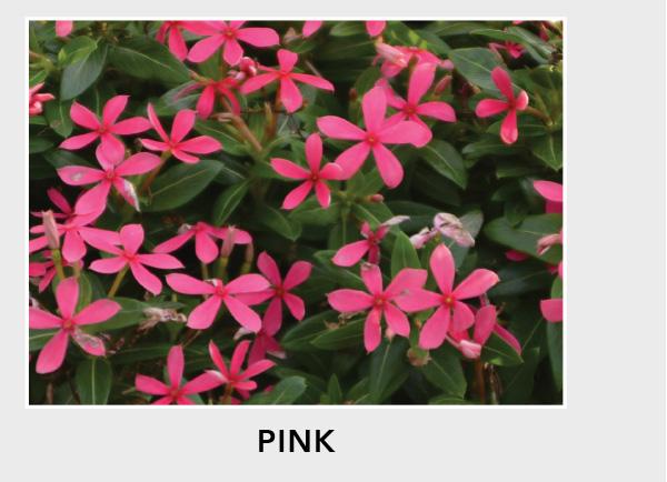 Soiree Kawaii Pink
