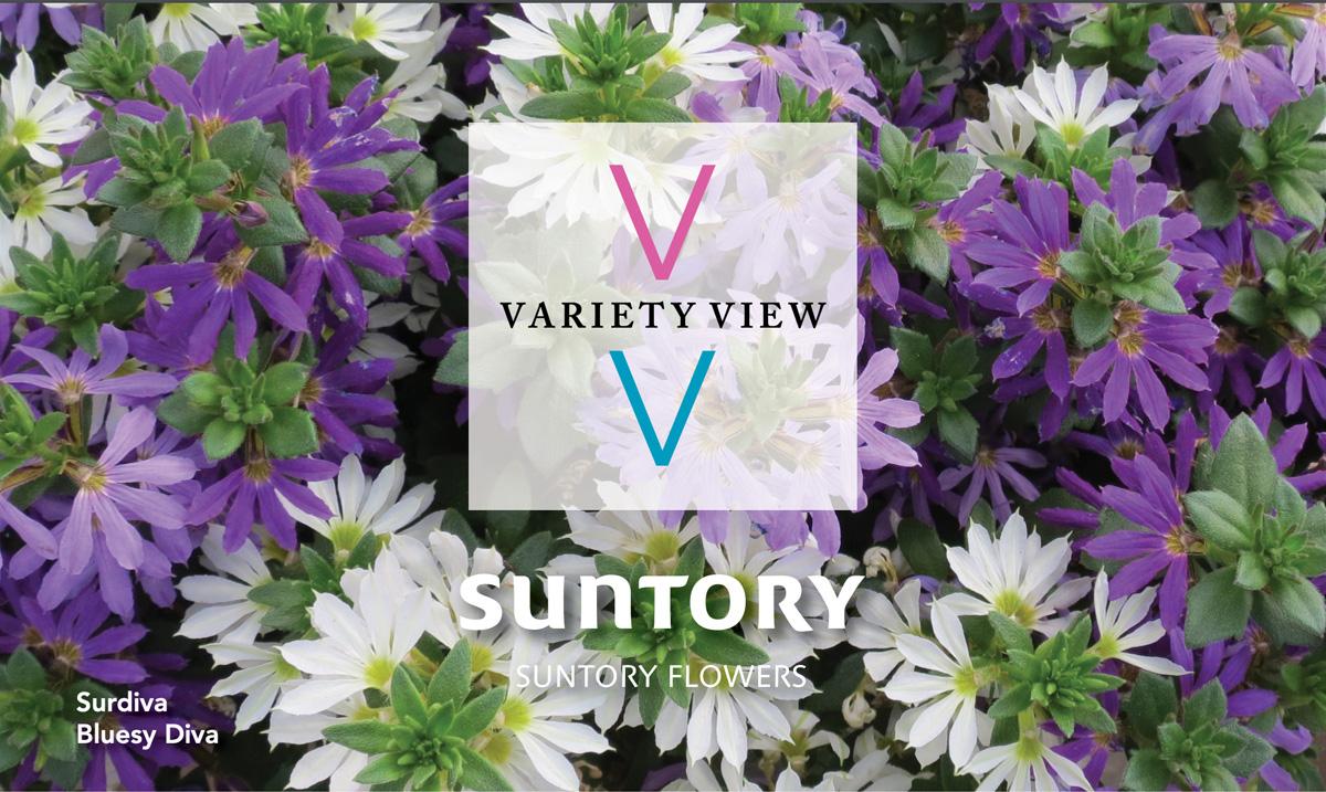 Suntory Flowers Variety View – Surdiva Summer Combos
