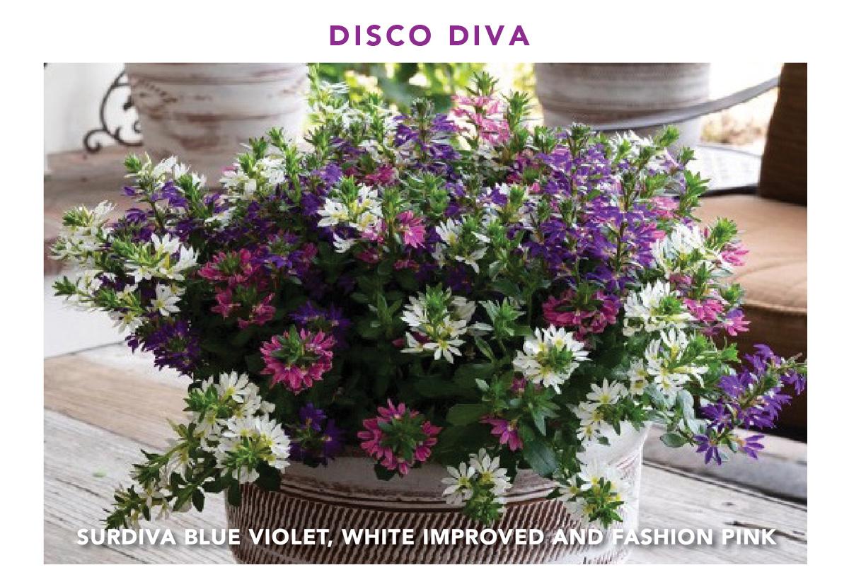 Surdiva Disco Diva