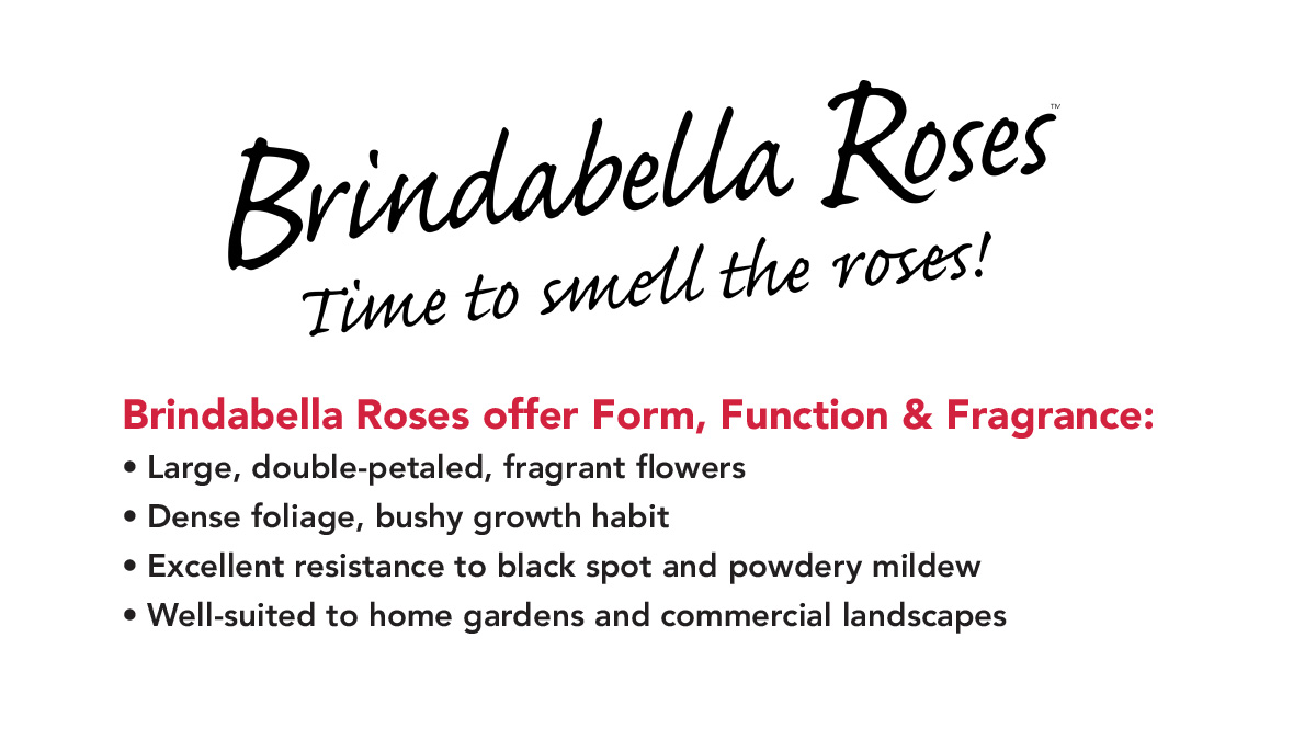Brindabella Roses