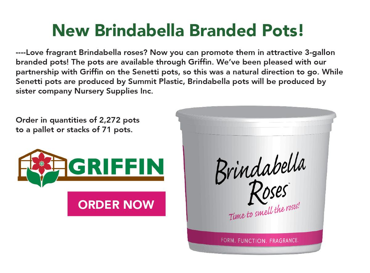 Order Brindabella Branded Pots