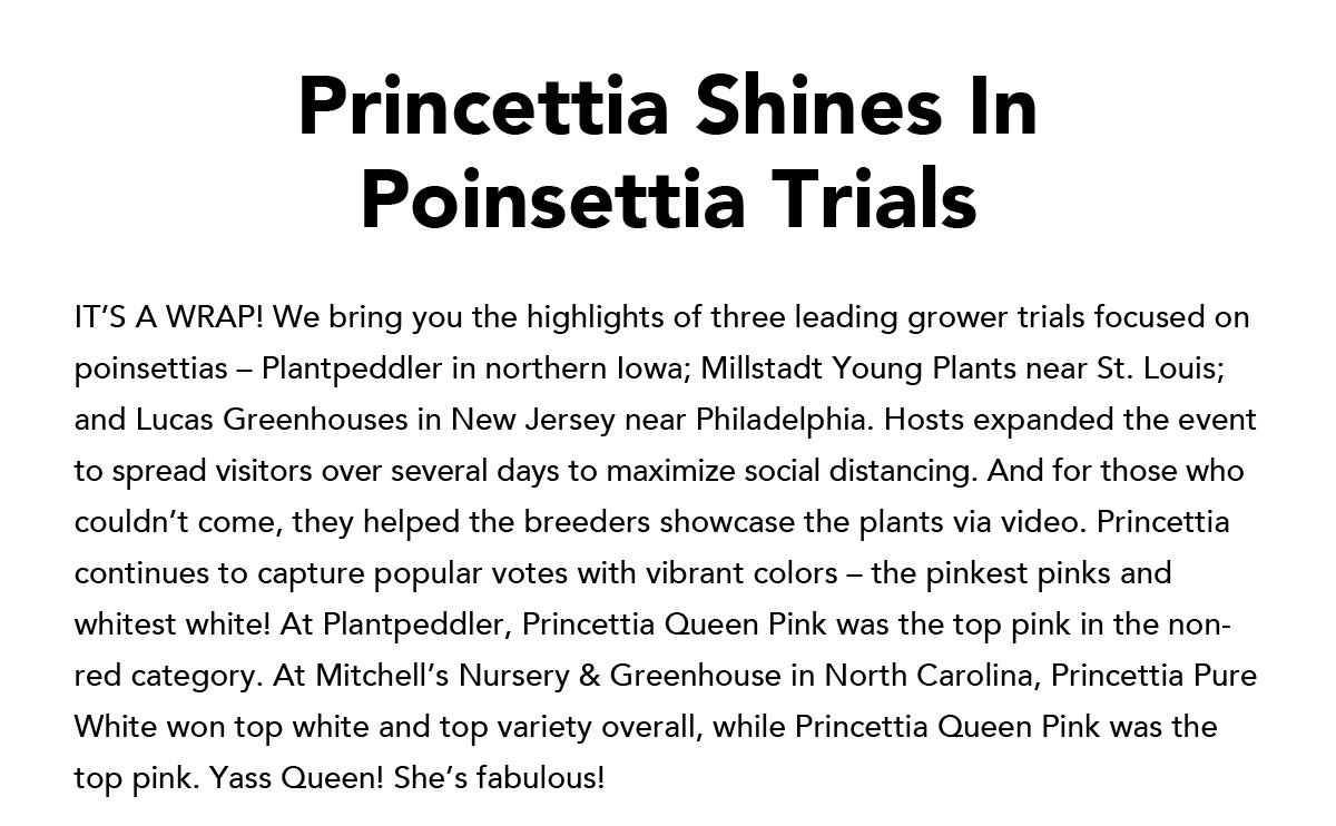 Princettia Shines In Poinsettia Trials