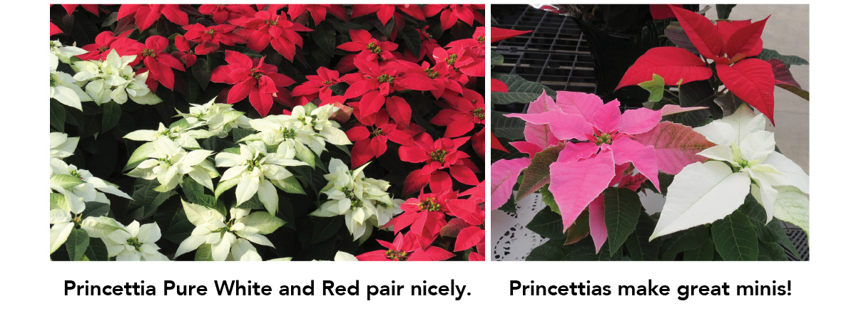 Princettia Pure White and Red pair nicely.