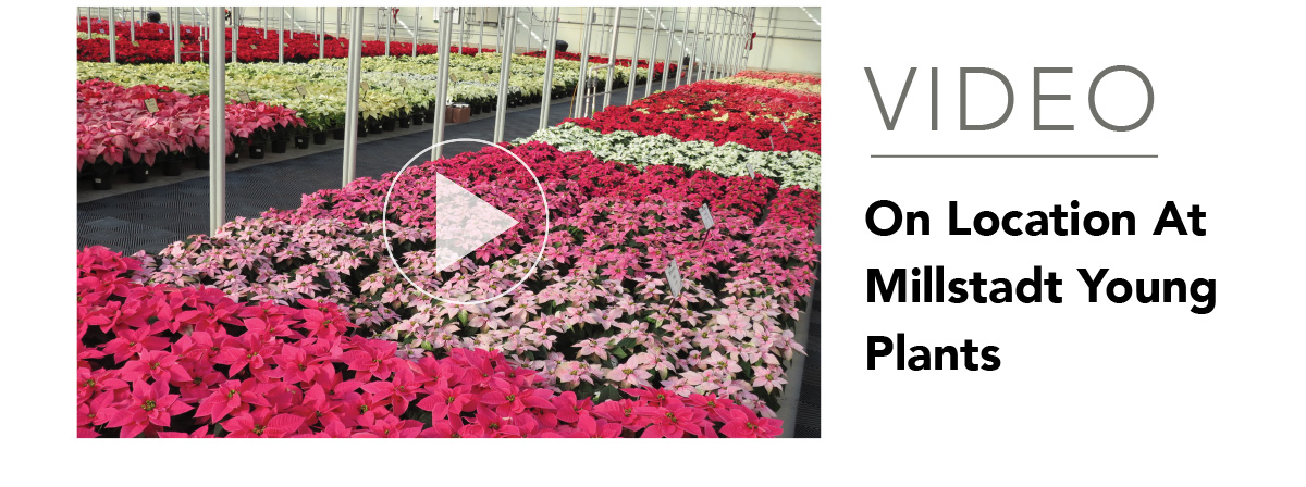 VIDEO: On Location at Millstadt Young Plants