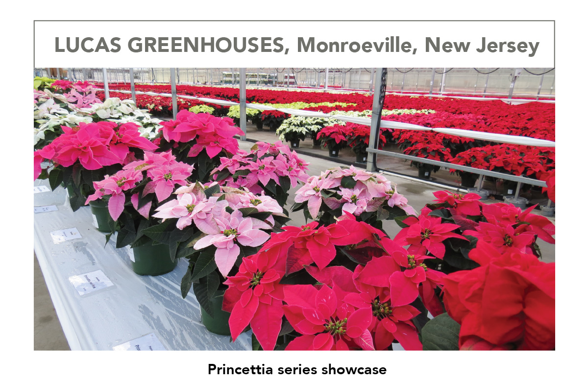 LUCAS GREENHOUSES, Monroeville, New Jersey