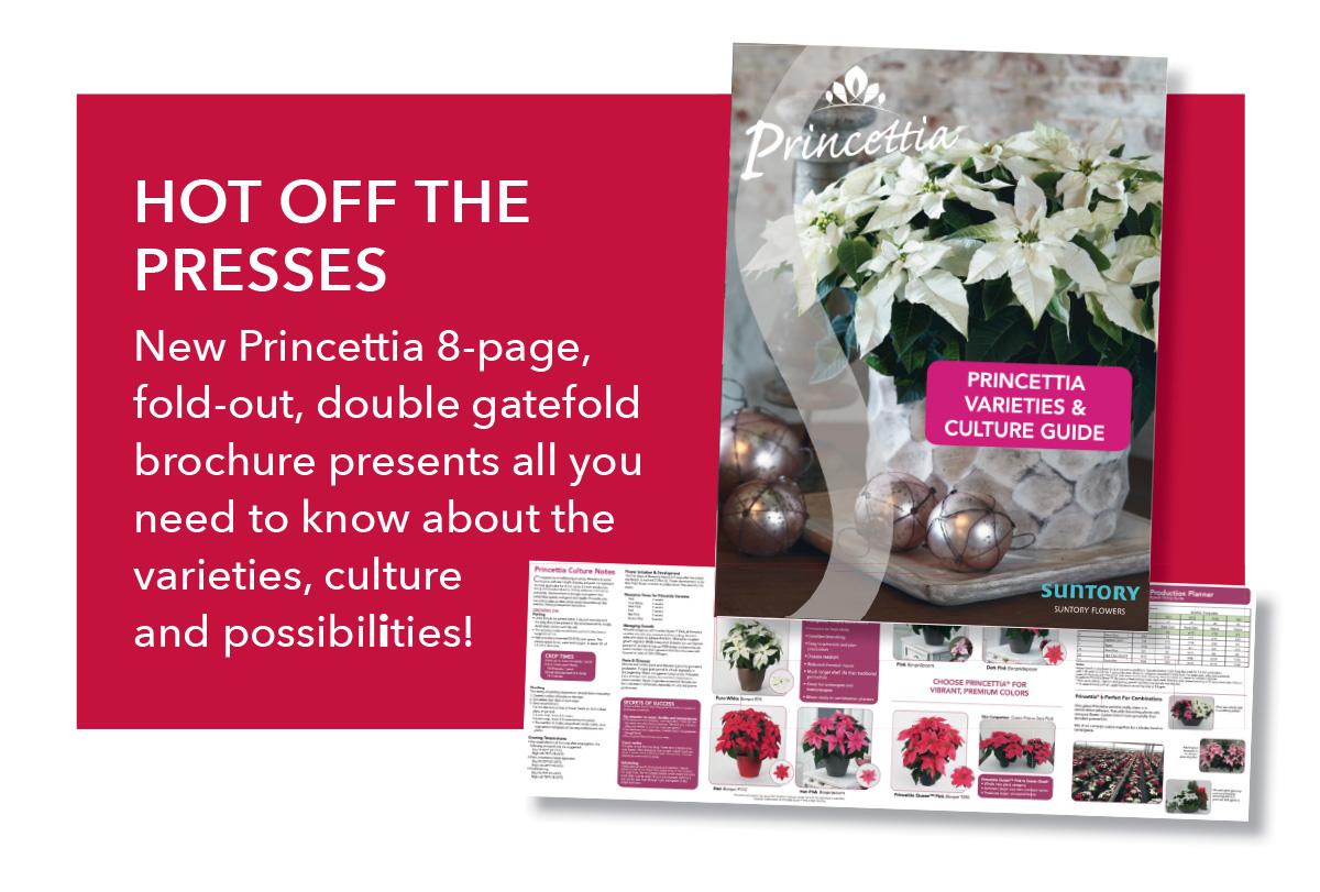 Download Princettia PDF Brochure