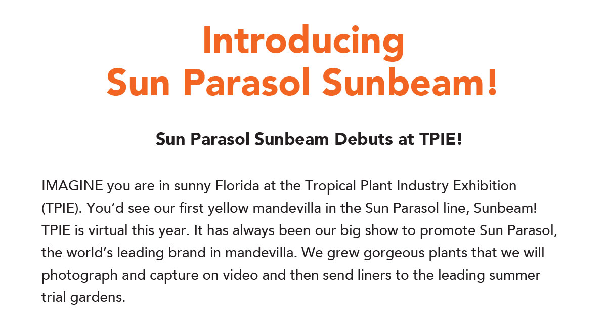 Introducing Sun Parasol Sunbeam - Debuts at TPIE!