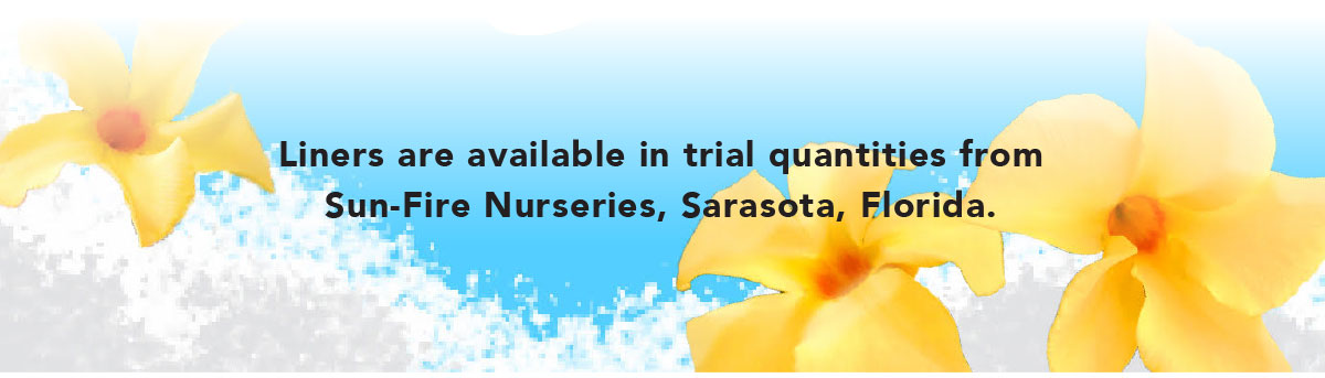 LINERS ARE AVAILABLE IN TRIAL QUANTITIES from Sun-Fire Nurseries, Sarasota, Florida