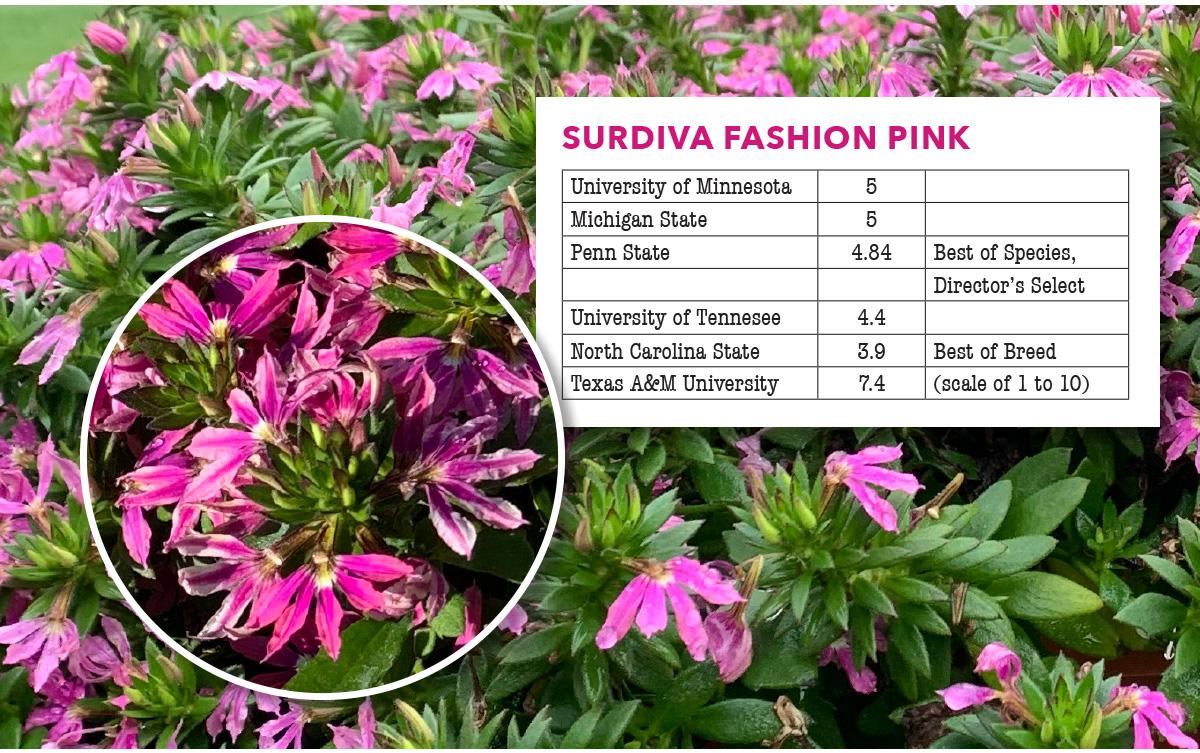 Surdiva Fashion Pink
