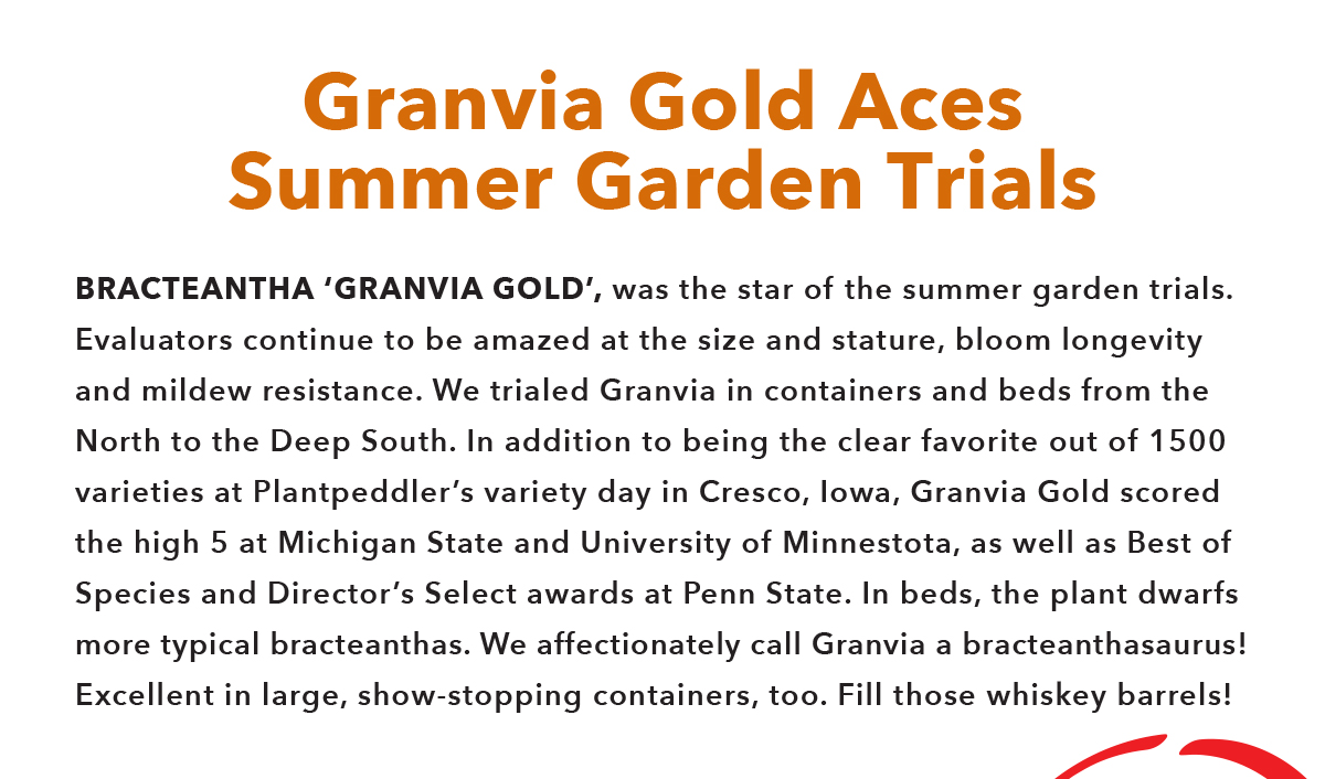Granvia Gold Aces Summer Garden Trials
