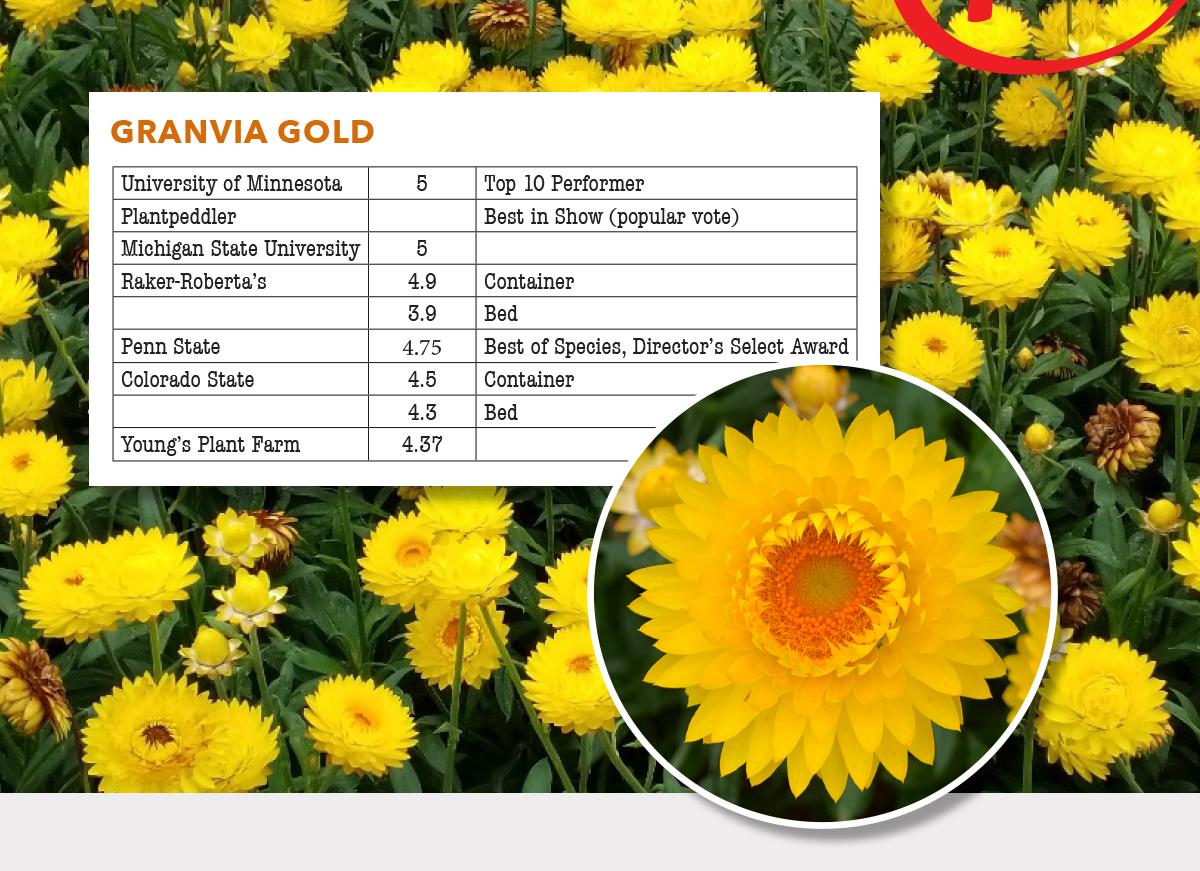 Granvia Gold