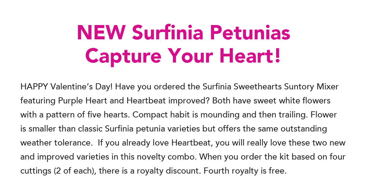 Surfinia Purple Heart and Heartbeat Improved