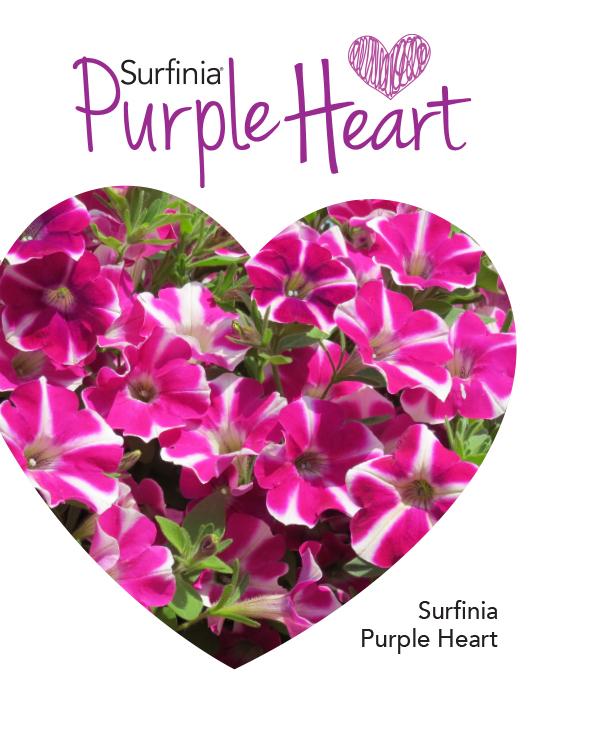 Surfinia Purple Heart