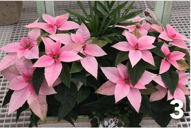 3. Tropical Dish Garden – Pink with foliage plants
