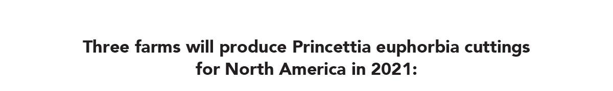 Three farms will produce Princettia euphorbia cuttings for North America in 2021