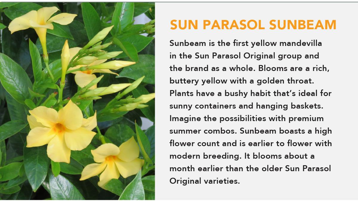 SUN PARASOL ORIGINAL Sunbeam