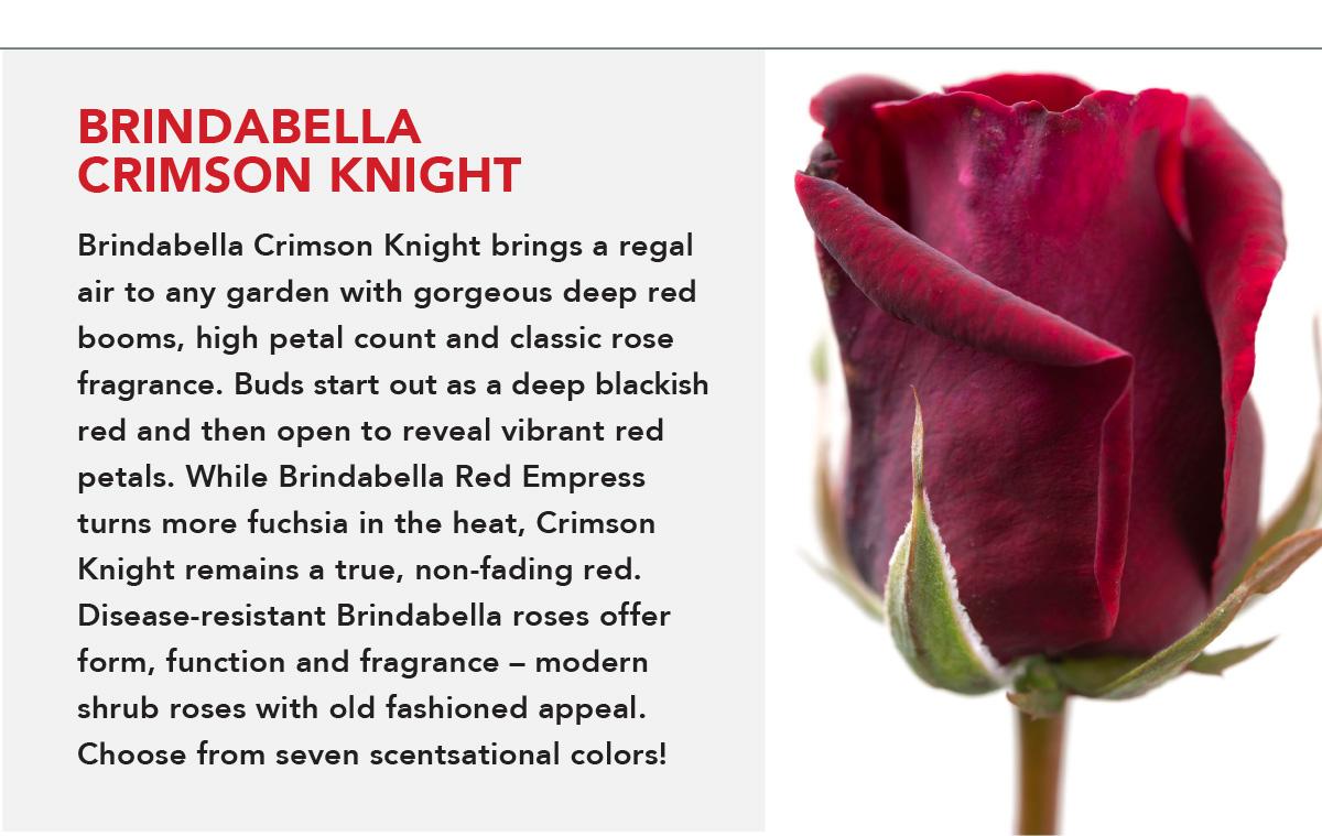 BrindabellaRoses - Crimson Knight