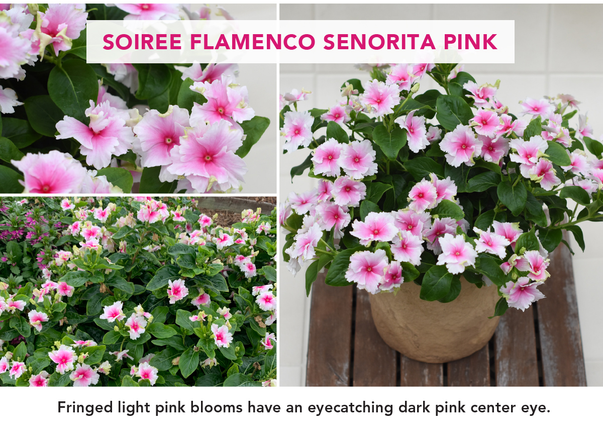 SOIREE FLAMENCO SENORITA PINK