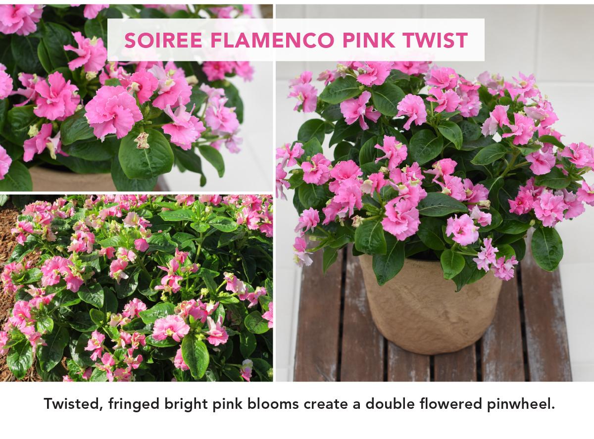 SOIREE FLAMENCO PINK TWIST