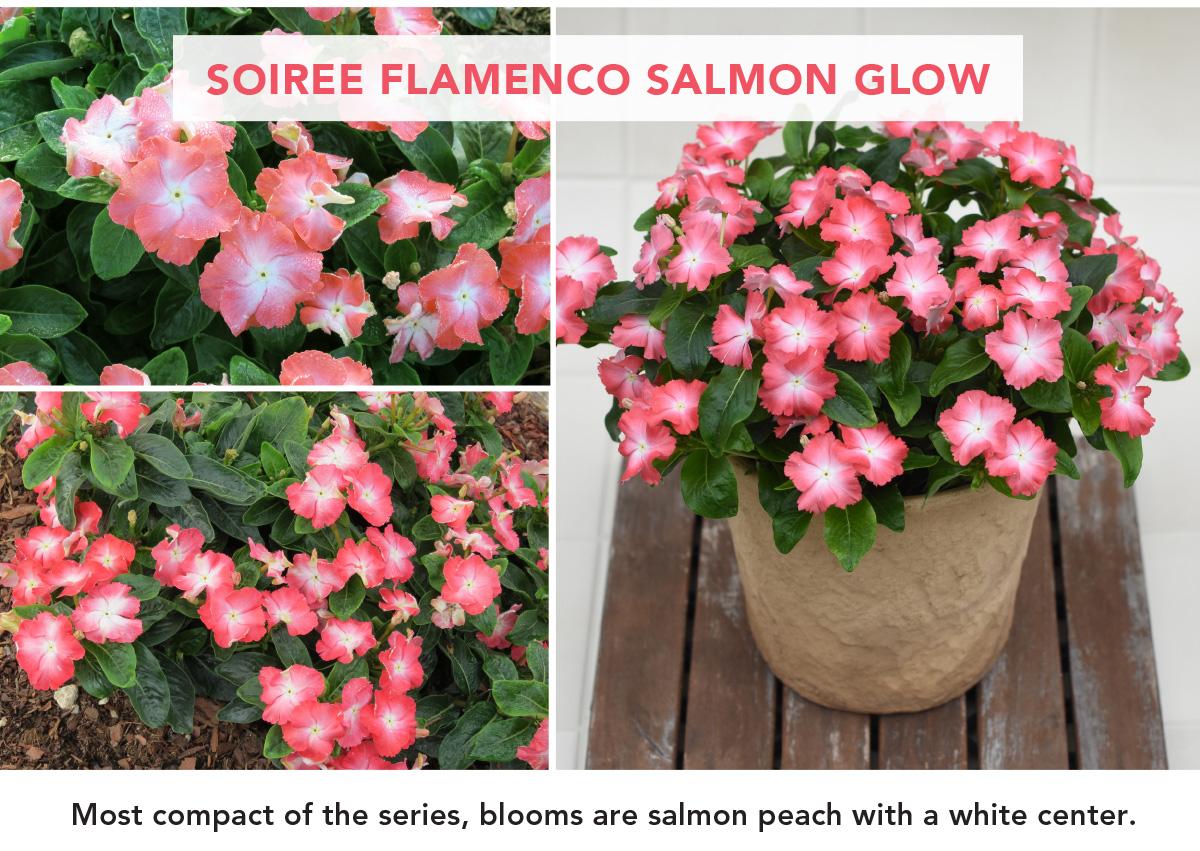 SOIREE FLAMENCO SALMON GLOW