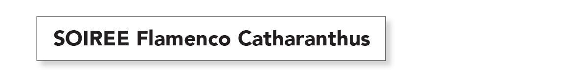 SOIREE FLAMENCO CATHARANTHUS