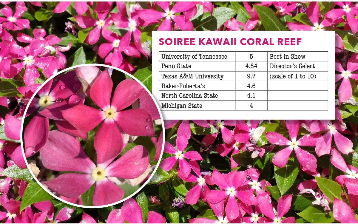 Soiree Kawaii Coral Reef