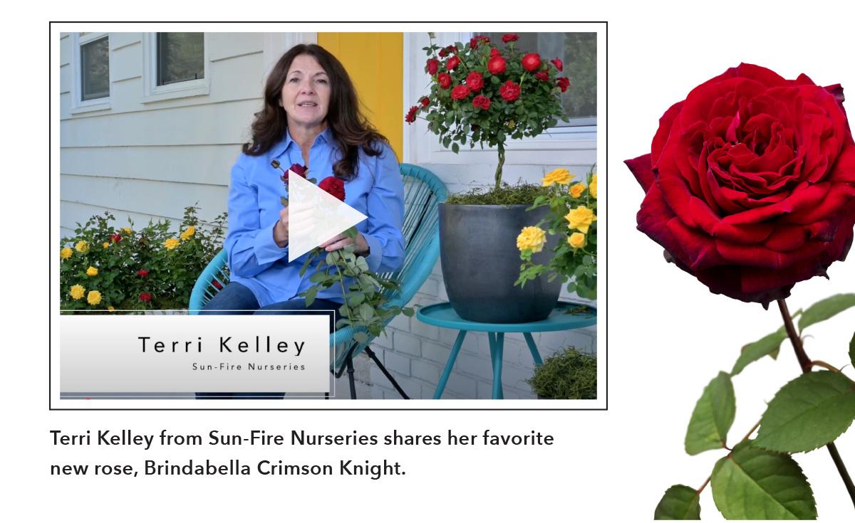 Terri Kelley Brindabella Crimson Knight video.