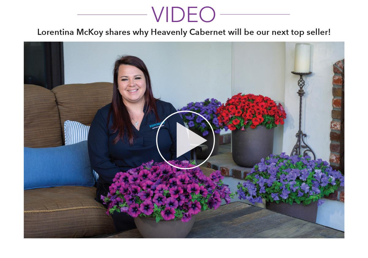 Watch Hevenly Cabernet Video