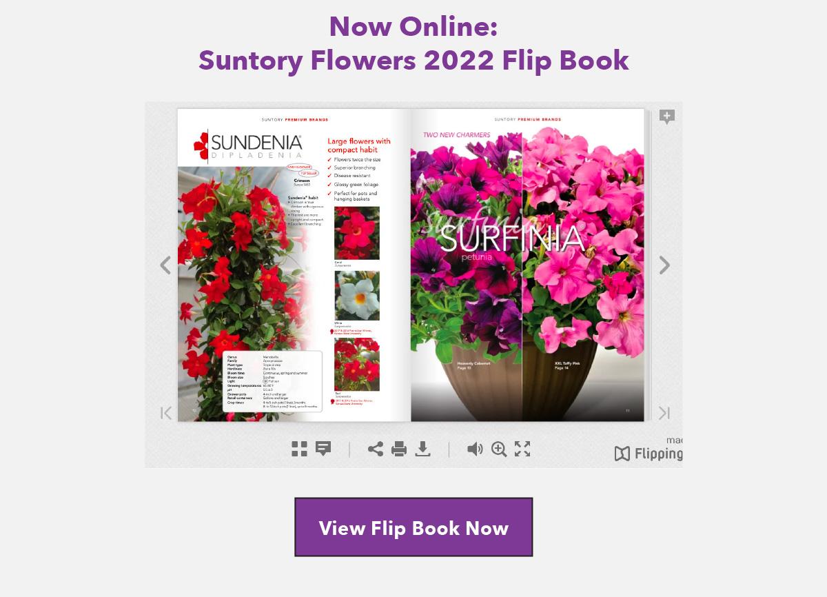 View Flipping Book Online