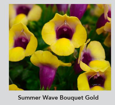 Summer Wave Bouqet Gold
