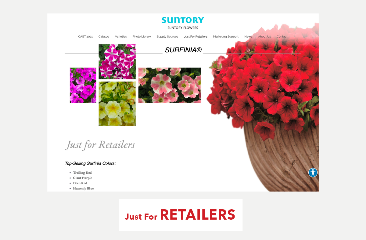 Just For Retailers: Surfinia