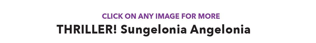 THRILLER! Sungelonia Angelonia